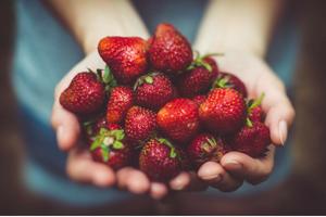 Berries, UPick, Whidbey Island, Oak Hrabor, Coupeville